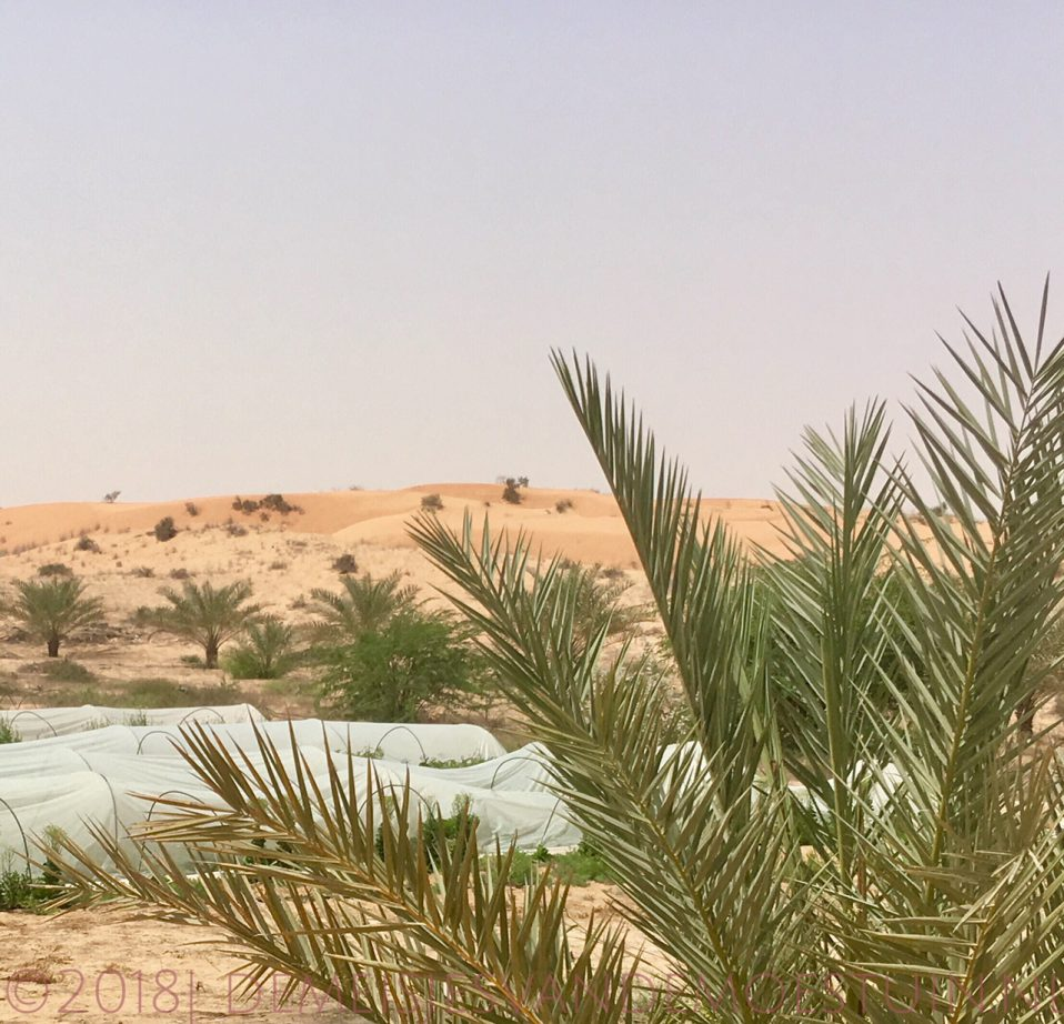 Een moestuin in de woestijn