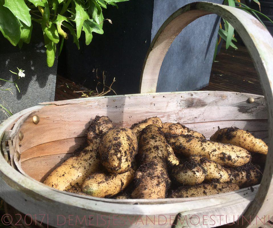 aardappels in de tuin en in de keuken
