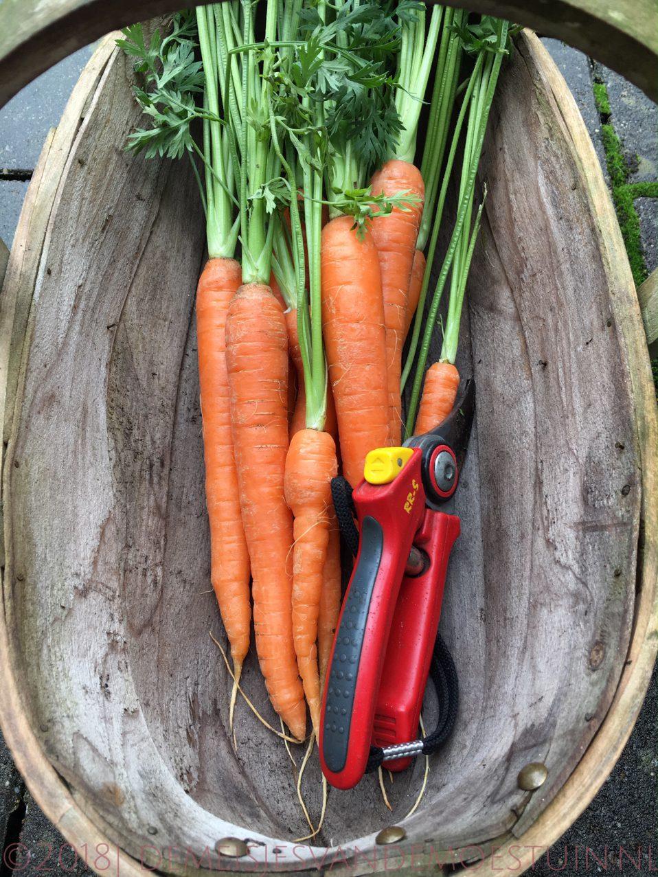 wortels oogsten
